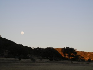 Moonrise at Madroño Ranch