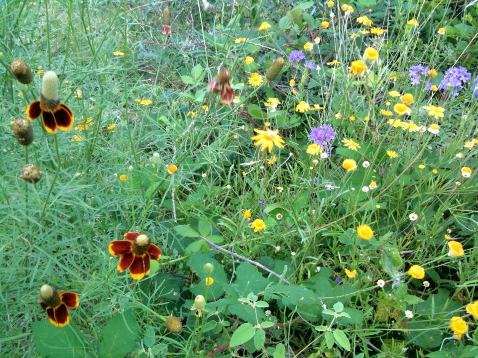 June wildflowers