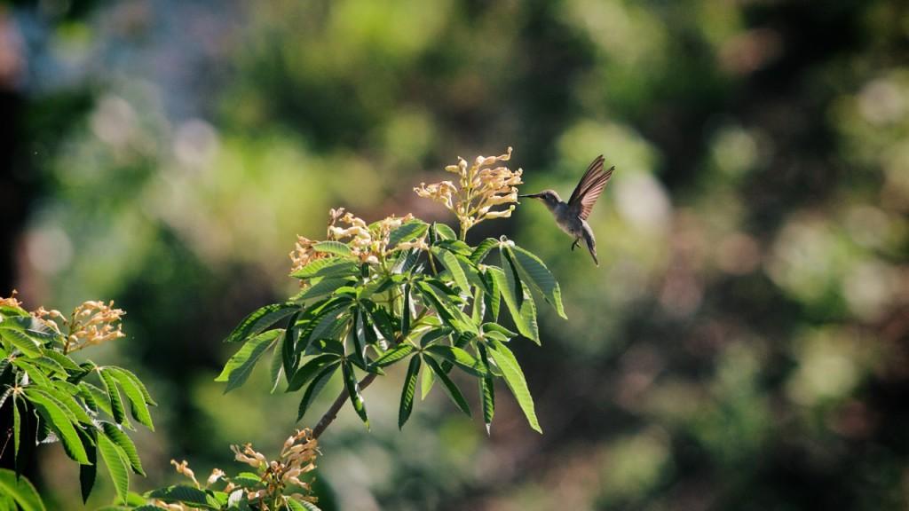 Hummingbird. Photo by Graham Burns.