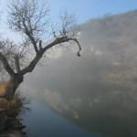 Mist and tree